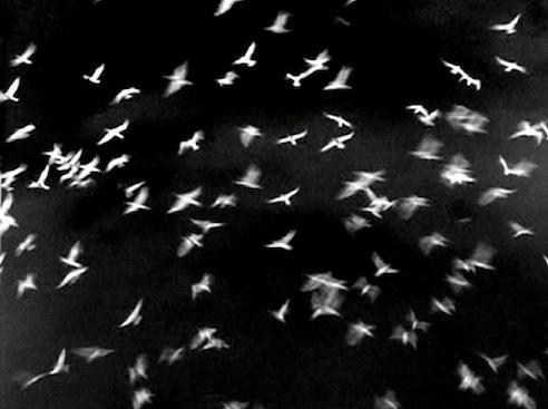 16mm birds2